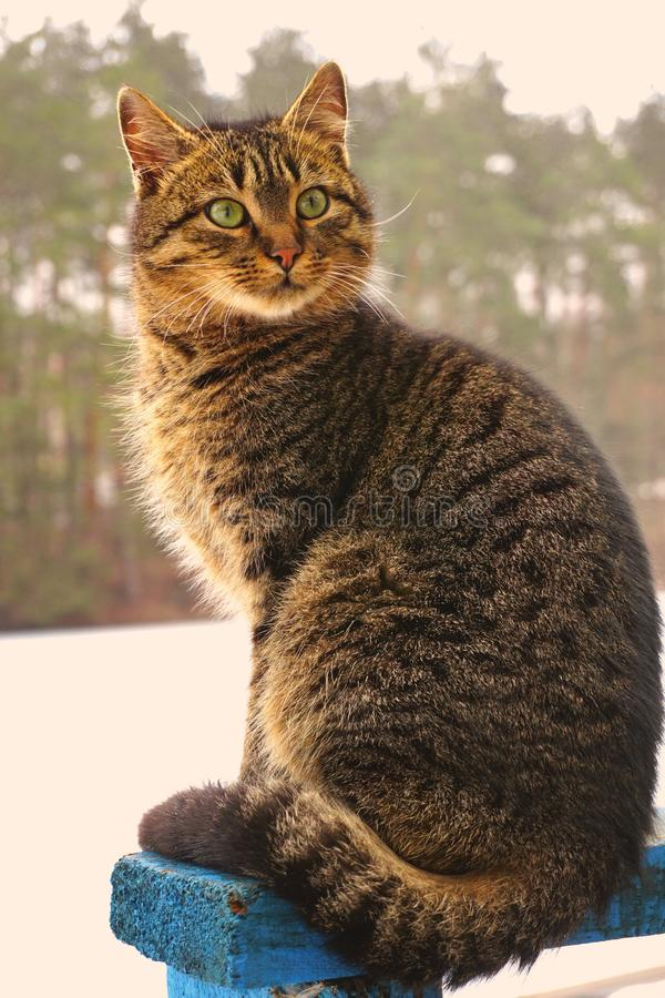 Geschokte grijze kat in de lentebos met grote groene ogen, grijze wol royalty-vrije stock foto