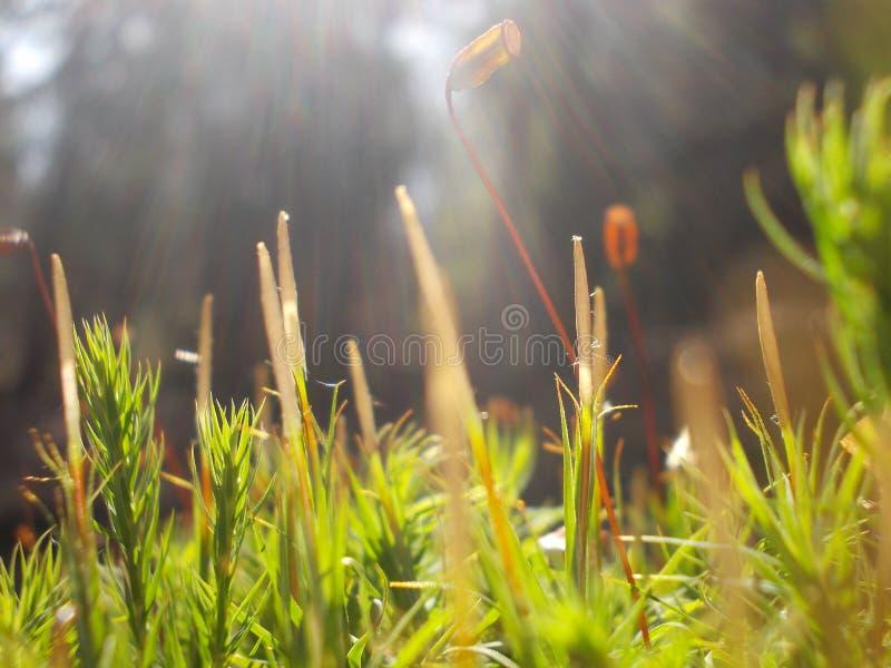 Geschossen von einem Frühlingsgras lizenzfreies stockbild