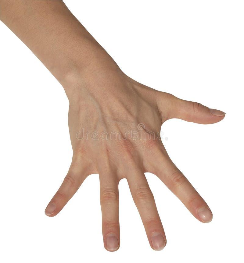 Geschrägte Weibliche Hand Stockbild