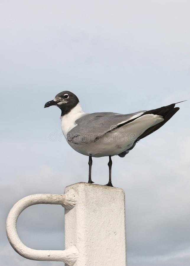 Geschriebener Vogel lizenzfreie stockfotografie