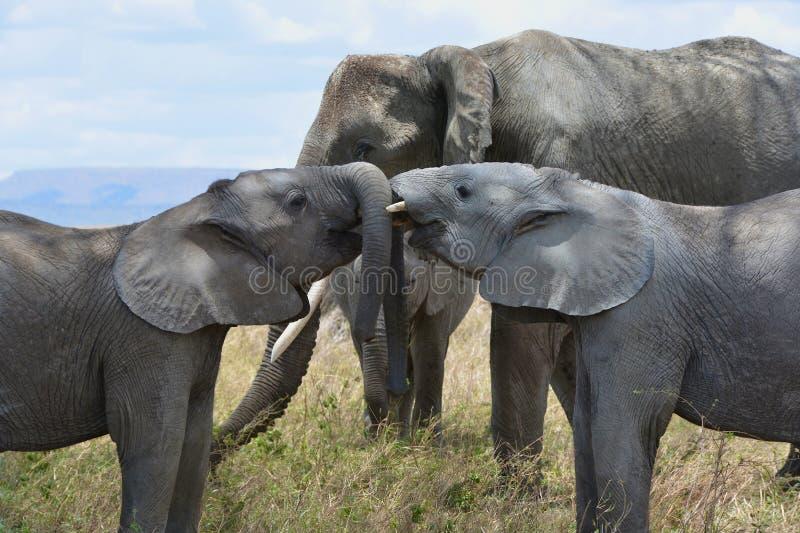 Geschwister spielen im Serengeti lizenzfreie stockbilder