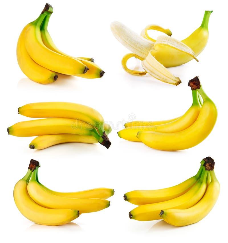 Gesetzte frische Bananenfrüchte getrennt auf Weiß stockfoto