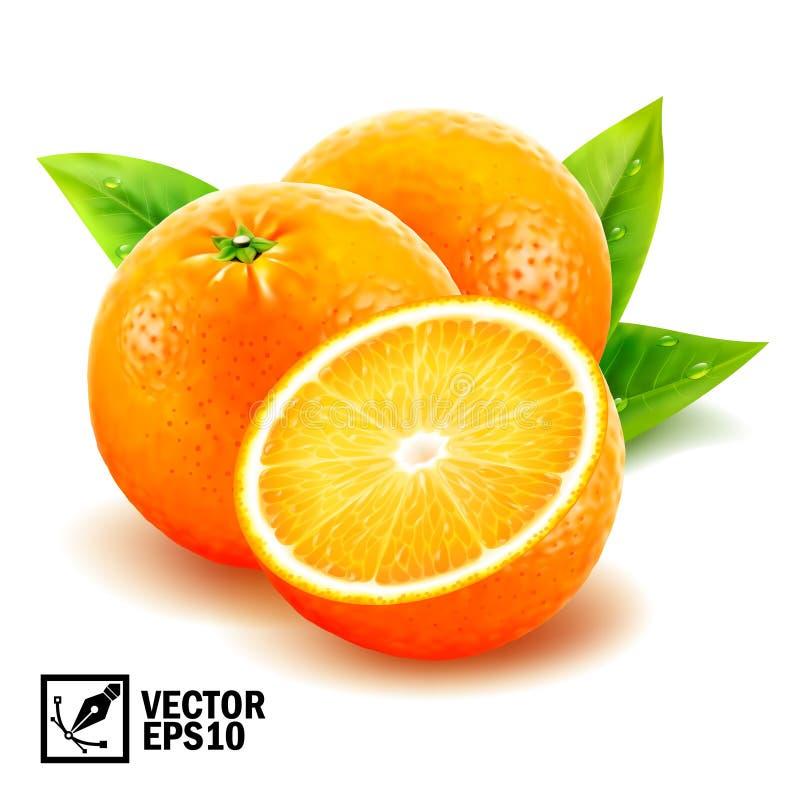 Gesetzte frische ganze Orangen des realistischen Vektors und geschnittene Orange mit Blättern und Tautropfen vektor abbildung
