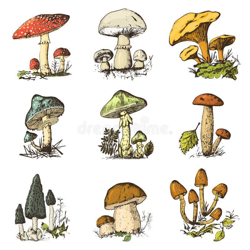 Gesetzte Hand des Pilzes gezeichnet graviert organisches vegetarisches Lebensmittel der Weinlese Champignon, Pfifferlinge, Honigp lizenzfreie abbildung