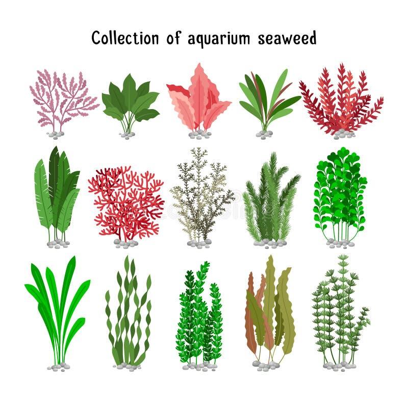 Gesetzte Illustration der Meerespflanze Gelbe und braune, rote grüne Aquariummeerespflanzenbiologische vielfalt lokalisiert auf W stock abbildung