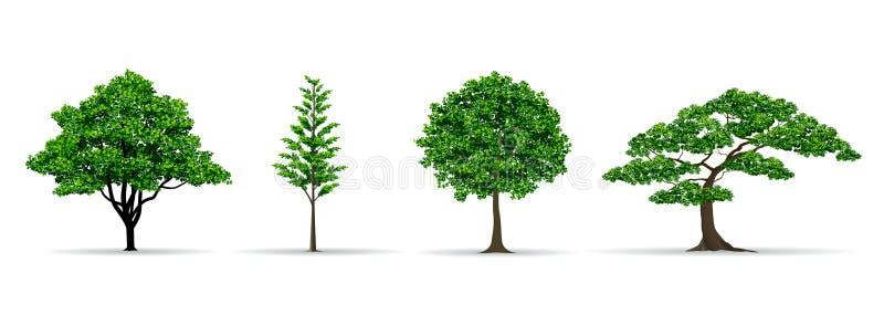 Gesetzte realistische Vektorillustration des Baums lizenzfreie abbildung