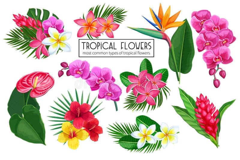 Gesetzte tropische Blumen des Vektors vektor abbildung