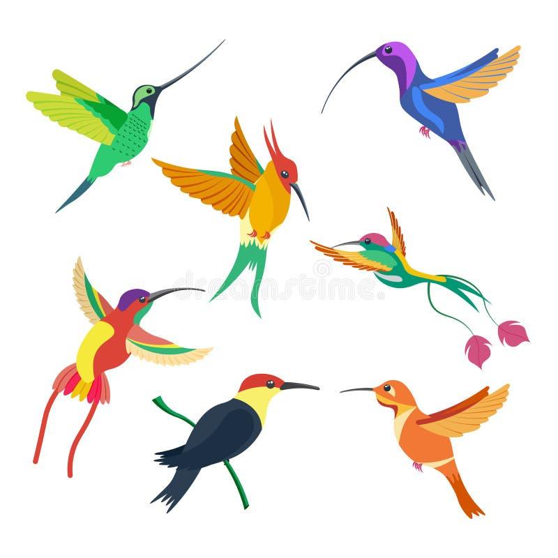 Gesetzte Vektorillustration des kleinen Vogelkolibris auf weißem Hintergrund lizenzfreie abbildung