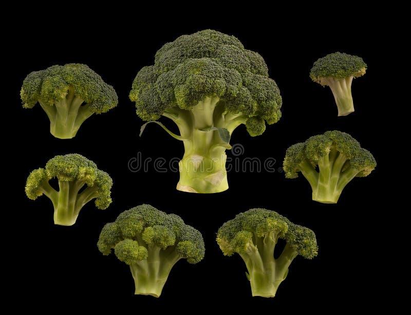 Gesetzter Brokkoli lokalisiert auf schwarzem Hintergrund Flache Lage stockbild