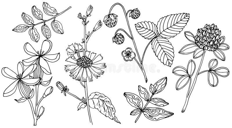 Gesetzter mit Blumenvektor des Gekritzels mit Gekritzelschwarzweiss-Elementen für Färbungsseite vektor abbildung