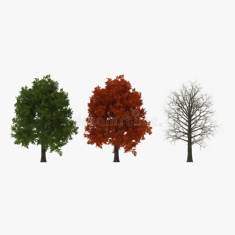 Gesetzter Sommer der roten Eiche, Winter, Herbst auf Weiß Abbildung 3D stock abbildung