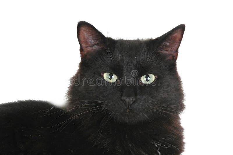 Gesicht der schwarzen Katze stockbild