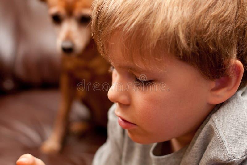 Gesicht des jungen Jungen mit kleinem Hund im Hintergrund lizenzfreie stockfotos