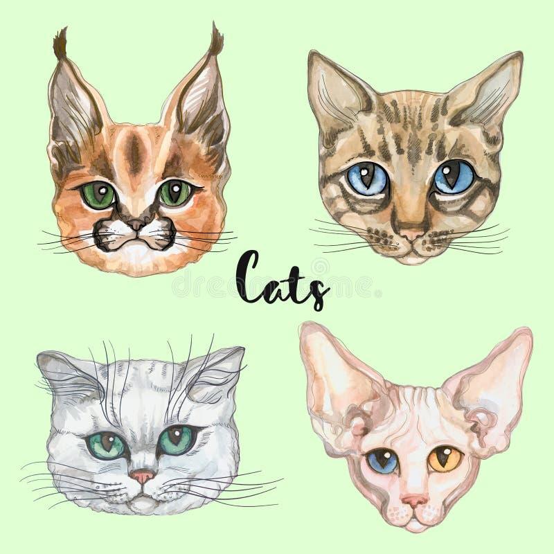 Gesichter von Katzen der unterschiedlichen Zucht set Vektor watercolor vektor abbildung