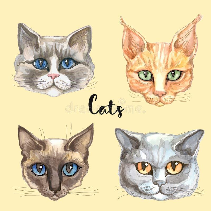 Gesichter von Katzen der unterschiedlichen Zucht set Vektor watercolor stock abbildung