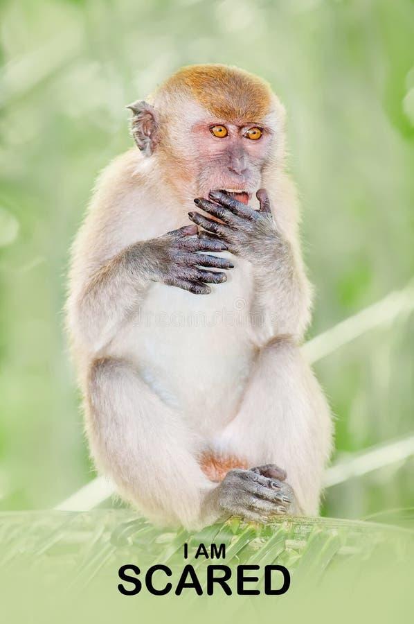 Gesichtsausdruck-Affen reflektieren menschliches Verhalten lizenzfreie stockfotos