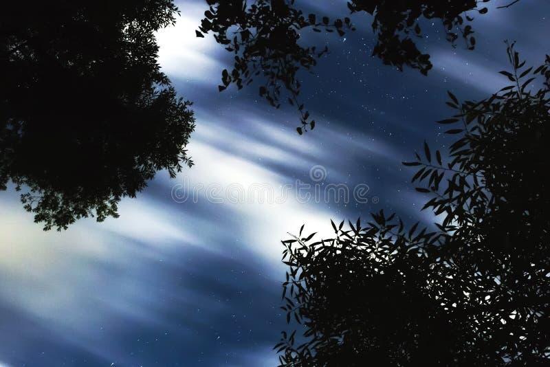 Gesilhouetteerde boom tegen de achtergrond van de nachthemel royalty-vrije stock foto