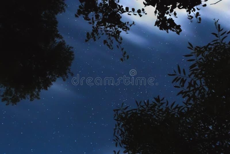 Gesilhouetteerde boom tegen de achtergrond van de nachthemel stock afbeeldingen