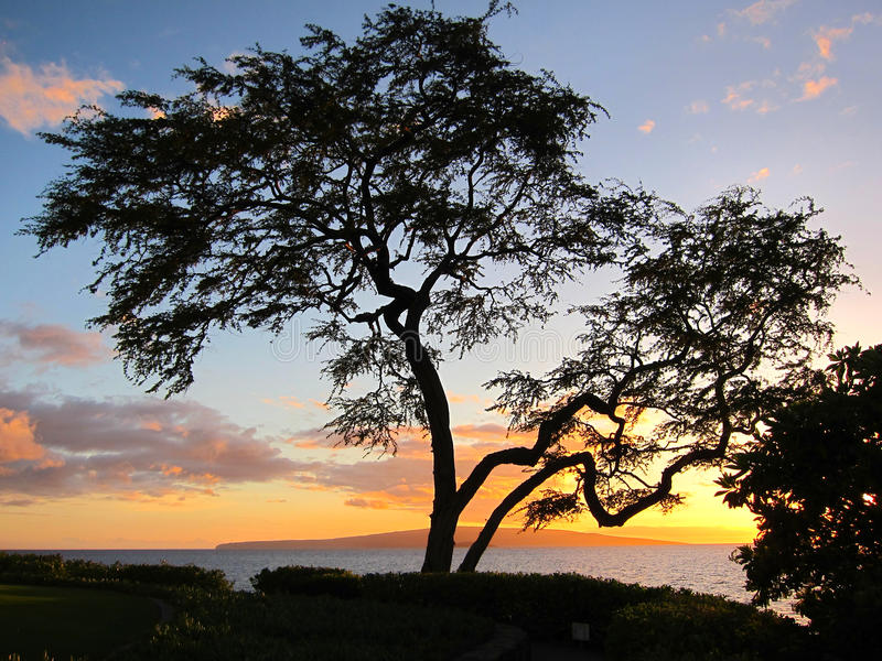 Gesilhouetteerde boom tegen oceaanachtergrond stock afbeelding