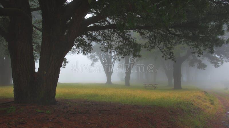 Gesilhouetteerde oude boom door een sleep door een mistig, spookachtig bos royalty-vrije stock fotografie
