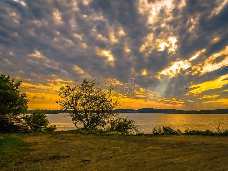 Gesilhouetteerde Takken en een Vogel in de Wolken royalty-vrije stock foto