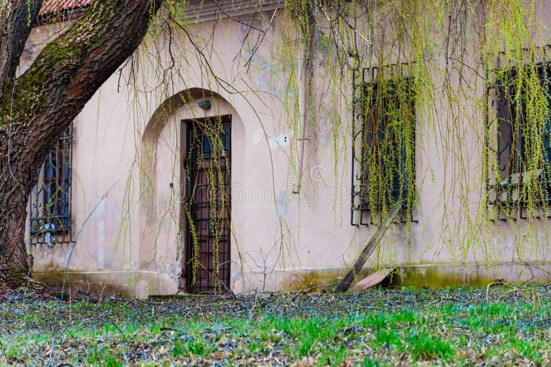 Gesloten boogdeur en venster onder wilgtakken met jonge bladeren Binnenplaatsingangen aan verlaten Katholieke kerk van royalty-vrije stock fotografie