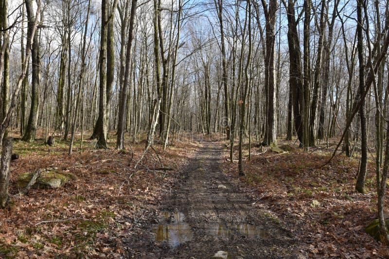 Gesloten looppad in de late herfstbossen royalty-vrije stock afbeelding