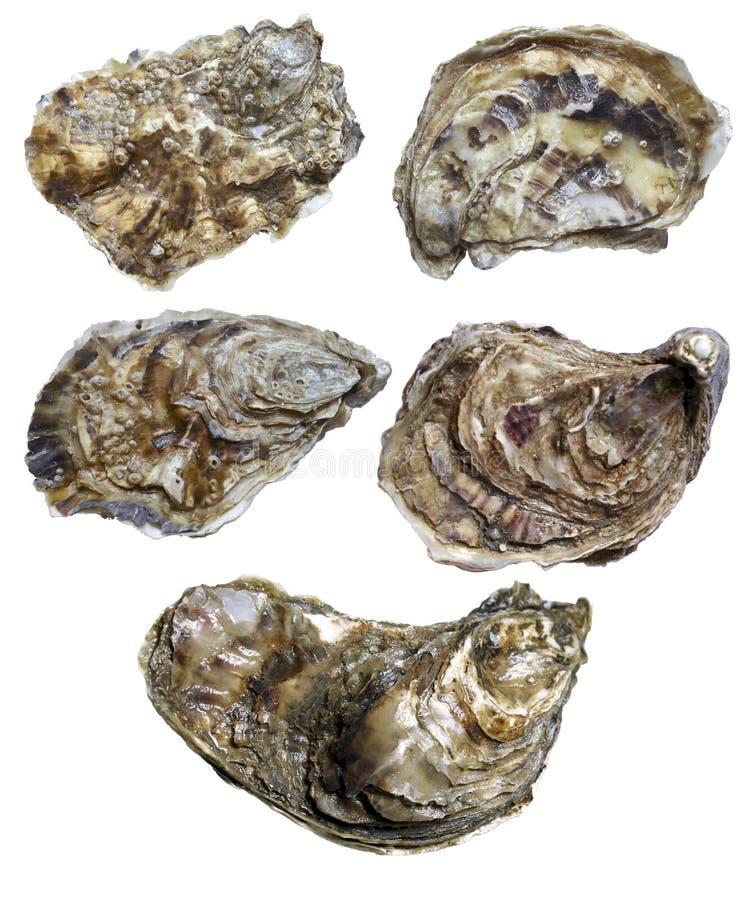 Gesloten oester royalty-vrije stock foto