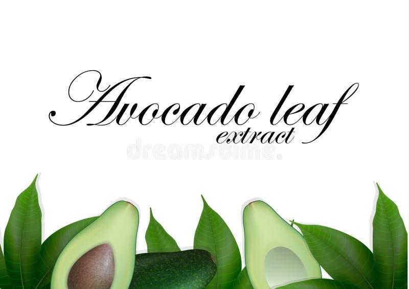 Gesneden avocadoachtergrond met bladeren Avocado'szaad met blad De avocadohelften Hoogste mening met ruimte voor tekst royalty-vrije illustratie