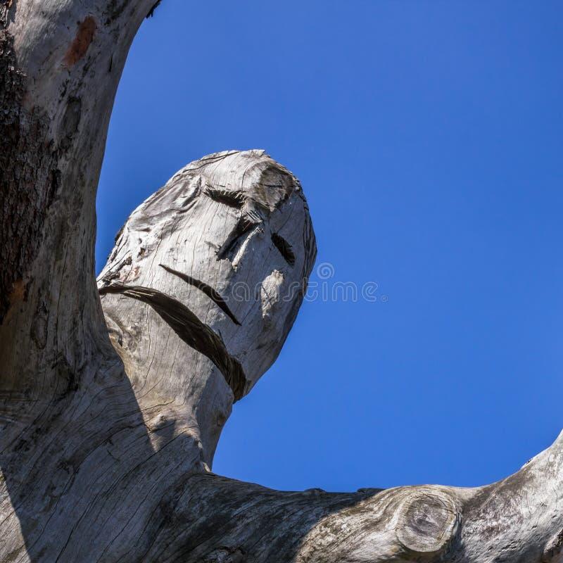 Gesneden boomboomstam stock afbeeldingen