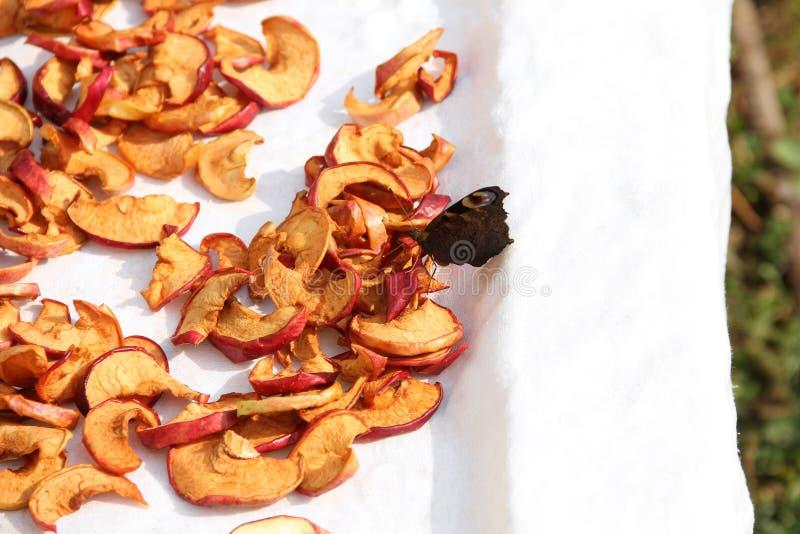 Gesneden droge appelen drying Droge appelachtergrond Vlinder bij het drogen stock fotografie