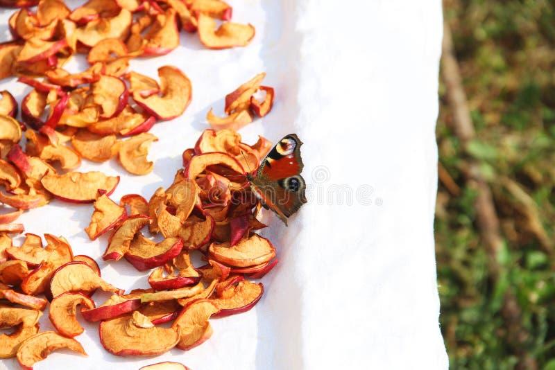 Gesneden droge appelen drying Droge appelachtergrond Vlinder bij het drogen stock afbeeldingen