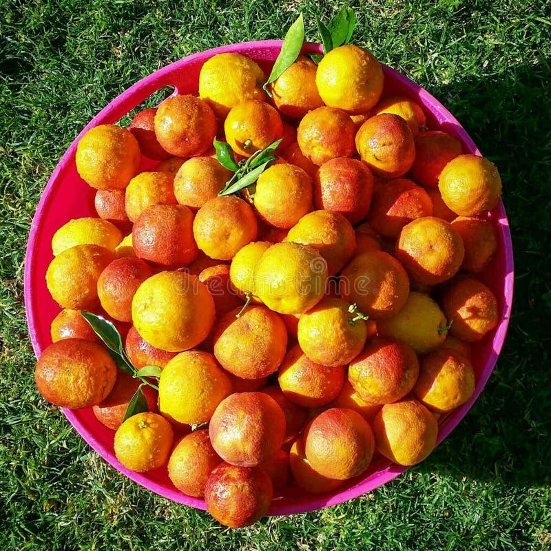 Gesneden sinaasappelen royalty-vrije stock foto's