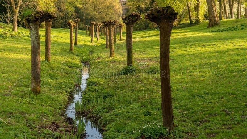 Gesnoeide bomen naast een stroom, Gladbeck, Duitsland royalty-vrije stock afbeelding