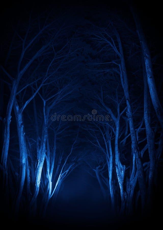 Gespenstische alte Baum-Park-Gasse stockbild