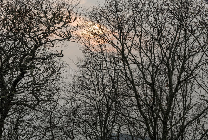 Gespenstische Bäume entlang blauen Ridge Parkway im späten Fall stockfoto