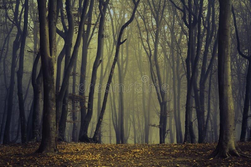 Gespenstische Bäume im Nebel des Waldes stockbild