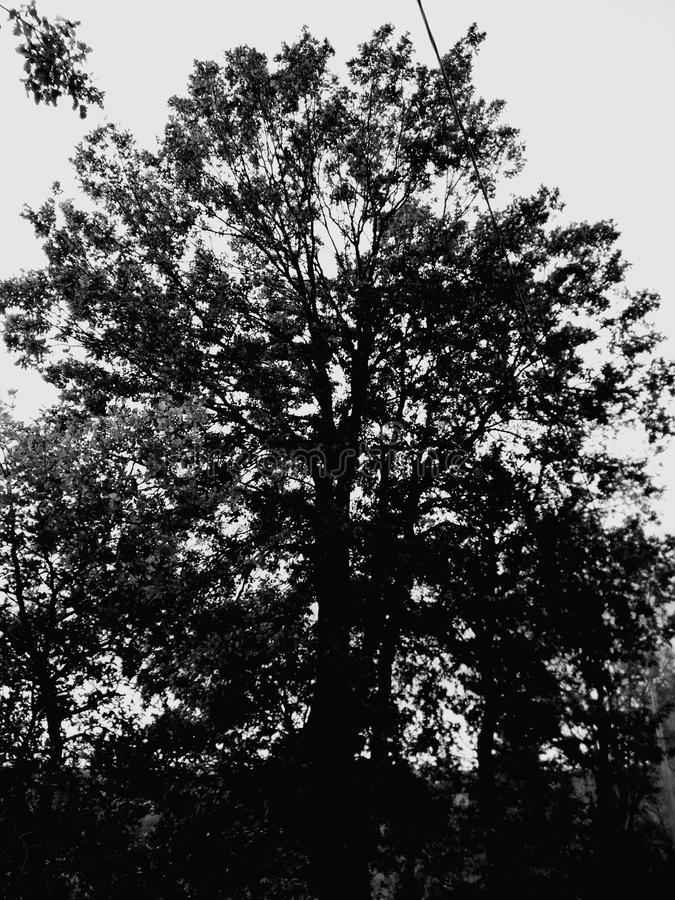 Gespenstischer Baum lizenzfreies stockbild