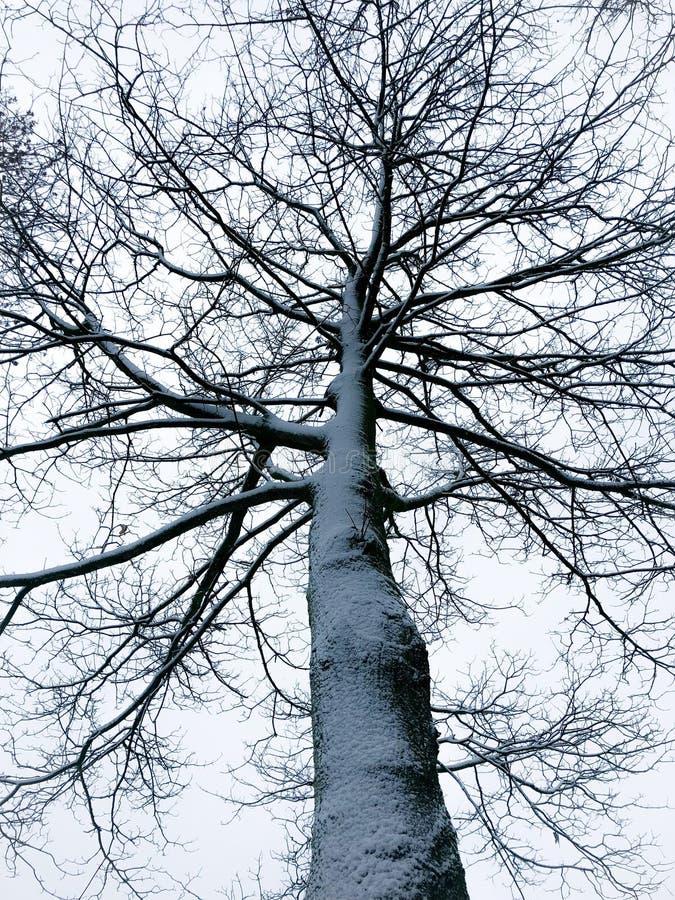 Gespenstischer Baum bedeckt mit Schnee im Winter stockbilder