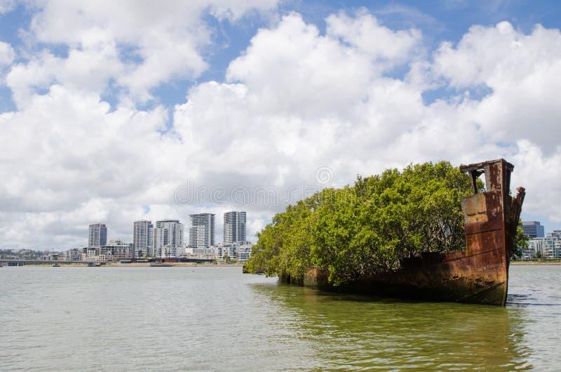 Gespenstischer Mangroven-Bäume ` des Schiffs Kirchhof voll-gewachsenes der sich hin- und herbewegende Wald-` Name unter den Einhe stockfotografie