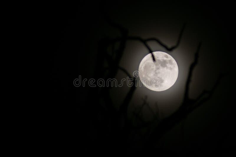 Gespenstischer Mond lizenzfreies stockbild