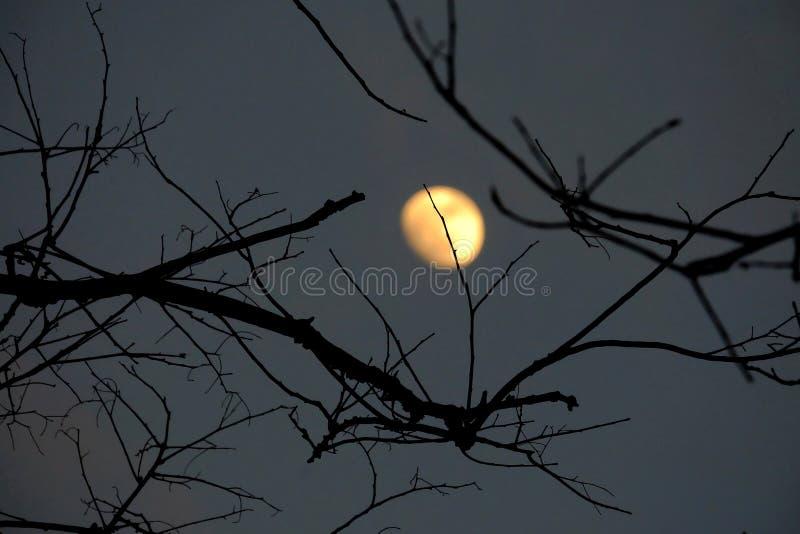 Gespenstischer Schatten von toten Baumbl?ttern in der dunklen Nacht lizenzfreie stockfotos
