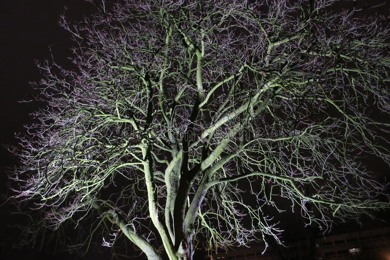 Gespenstischer Winterbaum um Mitternacht im purpurroten Licht lizenzfreie stockfotografie