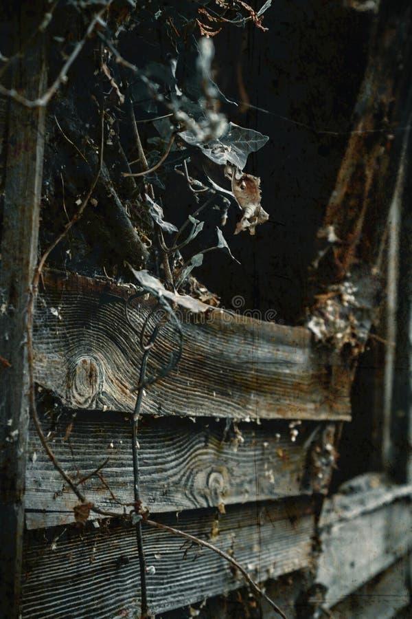 Gespenstisches Fenster mit spiderwebs und Efeu lizenzfreies stockfoto