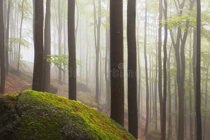 Gespenstisches schauendes Holz der schönen nebeligen Waldmärchen an einem nebelhaften Tag Kalter nebeliger Morgen im Horrorwald stockfotos
