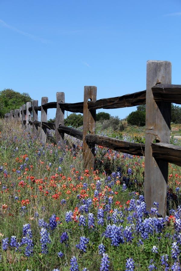 Gespleten het spooromheining van Texas in de Lente royalty-vrije stock fotografie