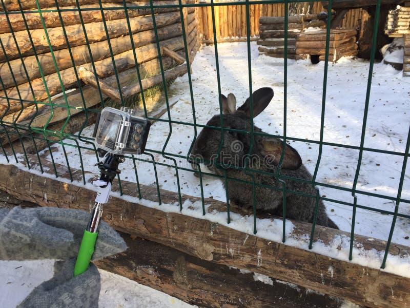 Gesprek met een konijn stock afbeelding