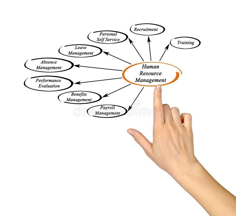 Gestão de recursos humanos ilustração do vetor