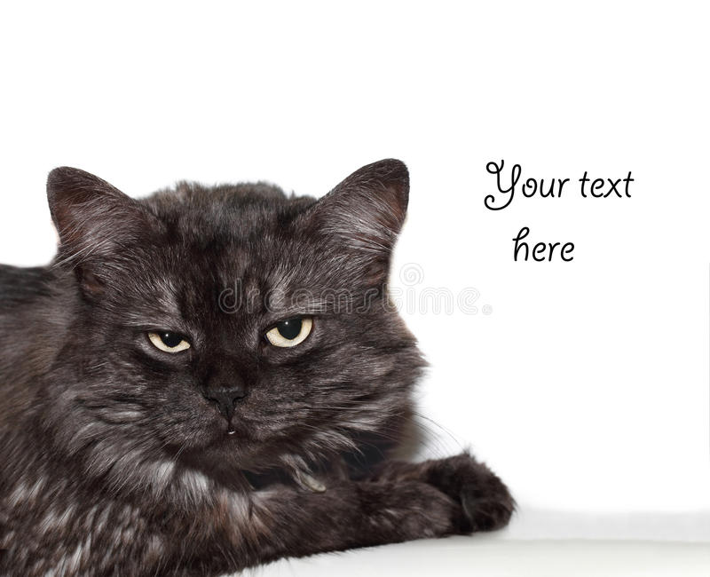 Gestörte Katze stockbilder