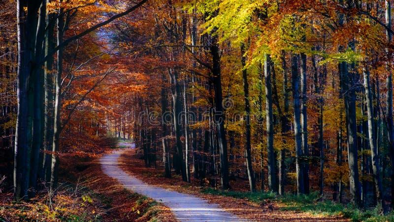 Gestalten Sie Ansicht der Herbstwalddes bunten Laubs und -straße landschaftlich lizenzfreies stockfoto
